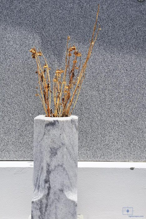 Dried Flower Stalks in a Marble Urn, St. Louis Cemetery No 1, New Orleans, Louisiana