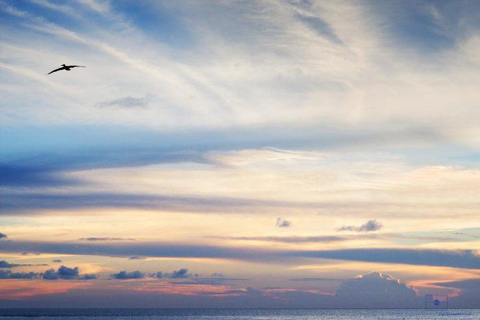 Pelican Gliding, Caswell Beach, Oak Island, North Carolina