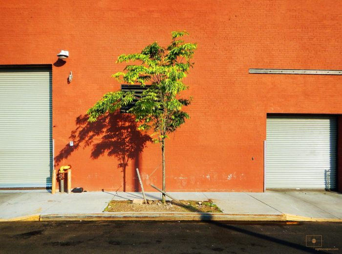 Tree and Orange Brick Warehouse at Sunset - Red Hook, Brooklyn
